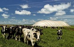 Interesse em rejeitos para gerar bioenergia cresce