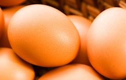 Oferta de ovos começa a dar sinais de elevação; preço segue estável