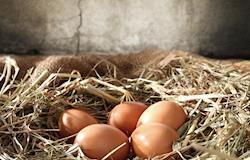 Ovos, ovos, fotos atualizadas