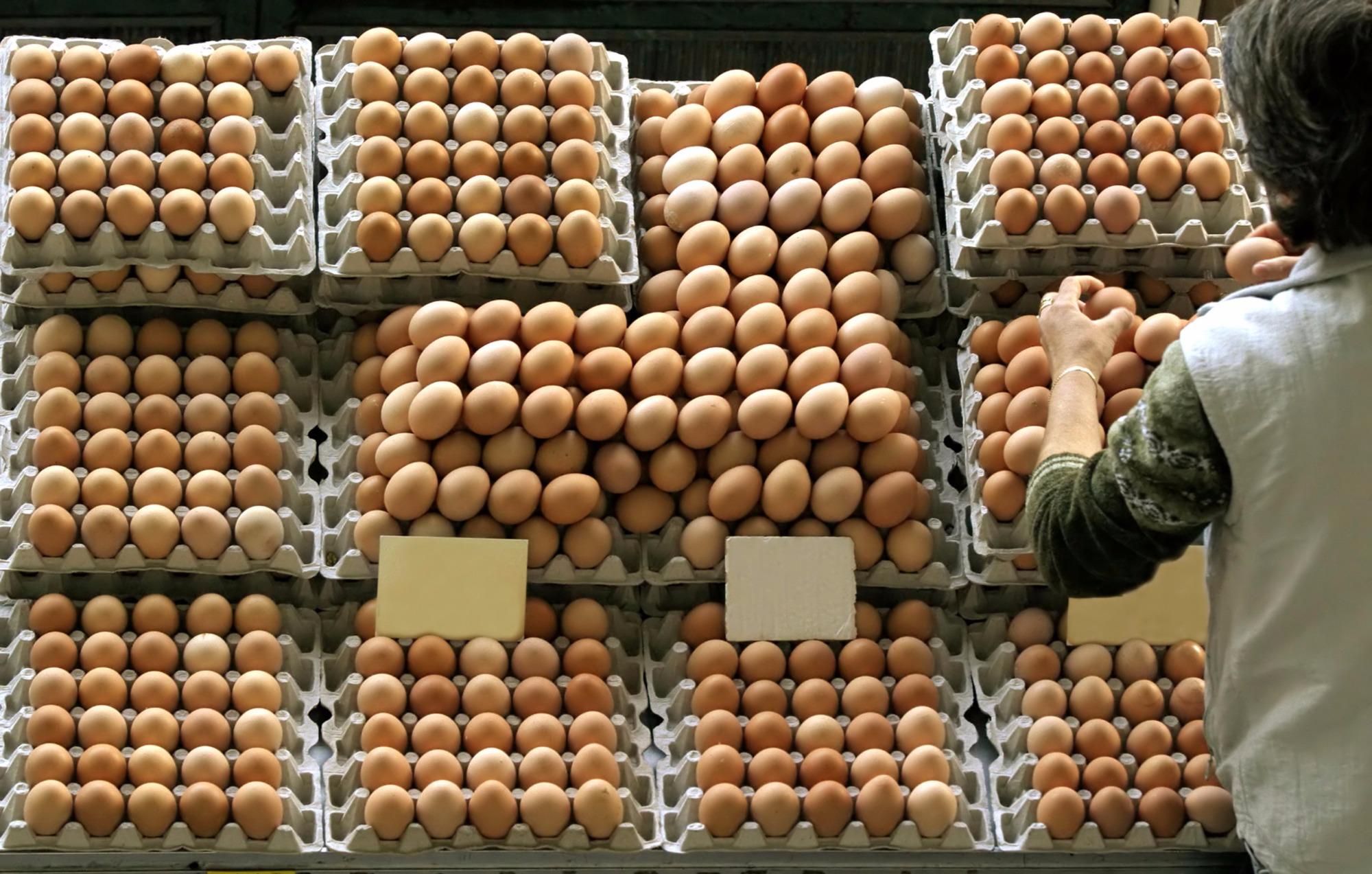 Entendendo as medidas para a produção de ovos saudáveis