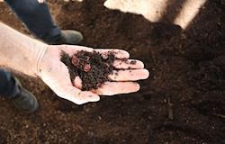 Conheça a gongocompostagem, opção vantajosa para produção de adubo orgânico