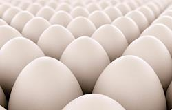Com demanda firme, preço dos ovos sobe 16,2% nas granjas