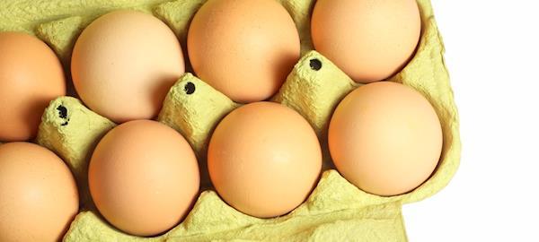 Poder de compra do avicultor de postura recua 40% em um ano
