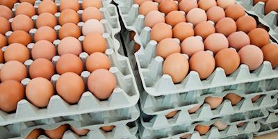 Vendas aquecidas de ovos sustentam os preços, aponta Cepea