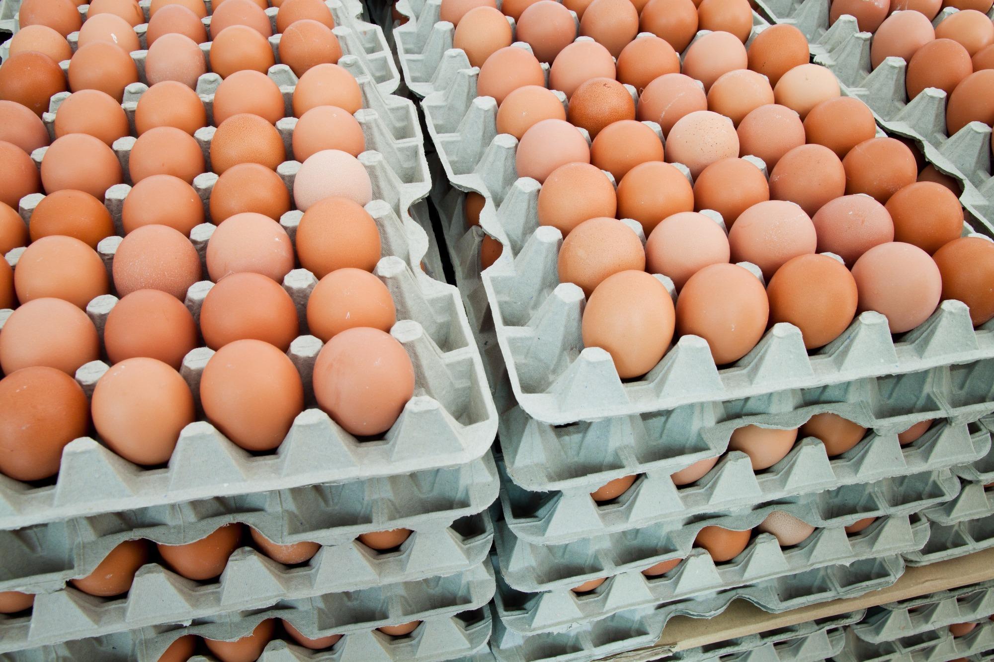 Pesquisadores da UFGD desenvolvem material que prolonga a validade de ovos na prateleira