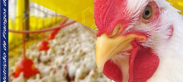 Livro sobre produção e nutrição de frangos de corte