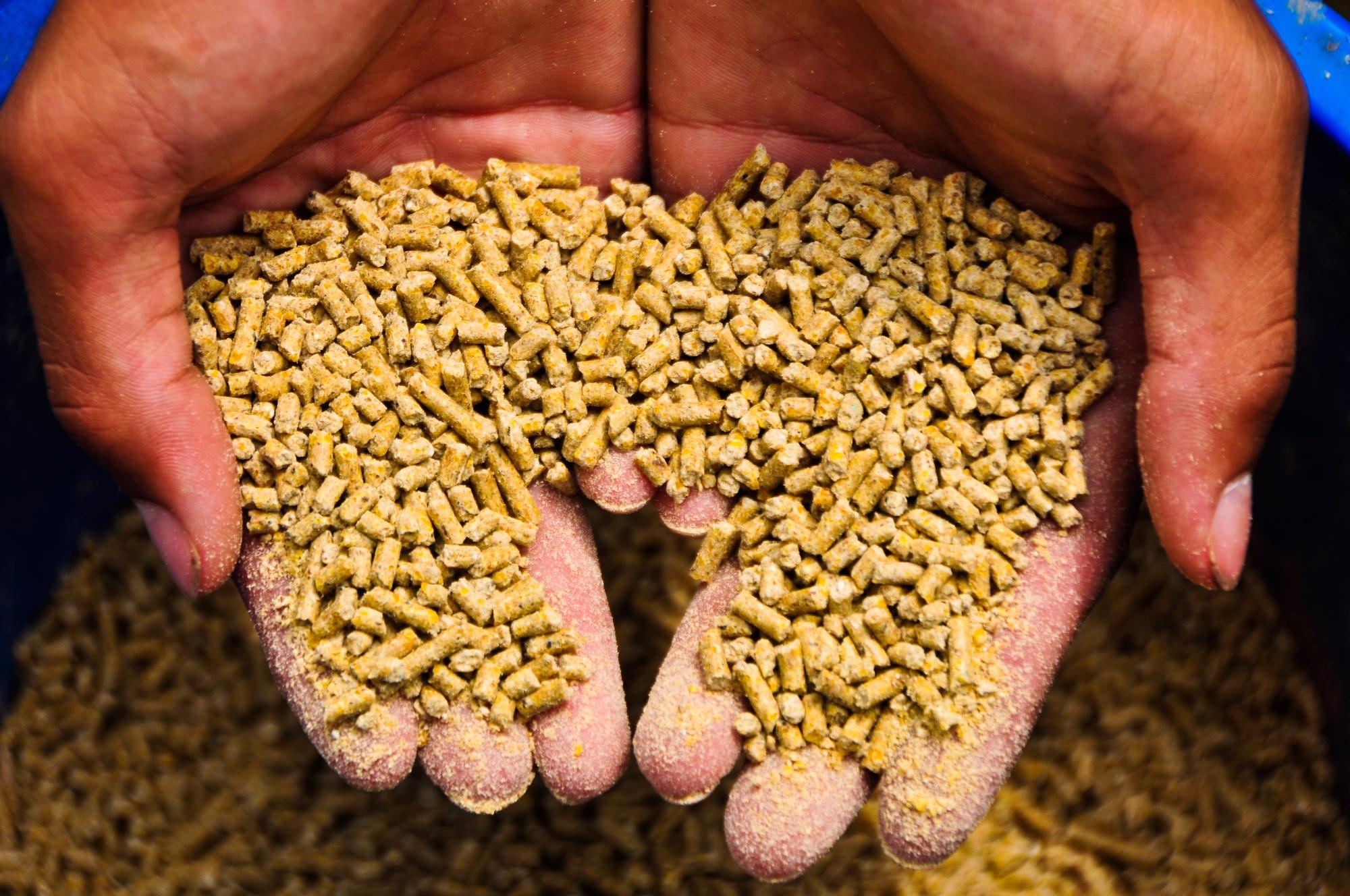 Nutrição de precisão: o novo caminho da produção animal