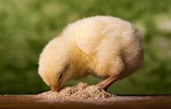 Sindirações prevê crescimento de 2% no setor de alimentação animal