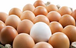 Fapesp oferece bolsa para desenvolvimento de software para simulação da produção de ovos