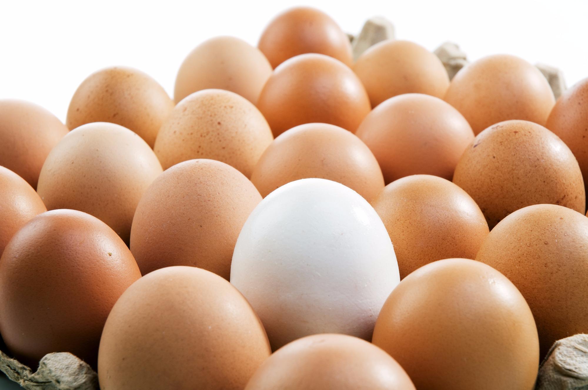 Preços dos ovos continuam estáveis na primeira quinzena