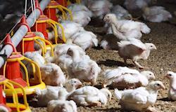 Governo abre inscrições para curso de avicultor no Pará