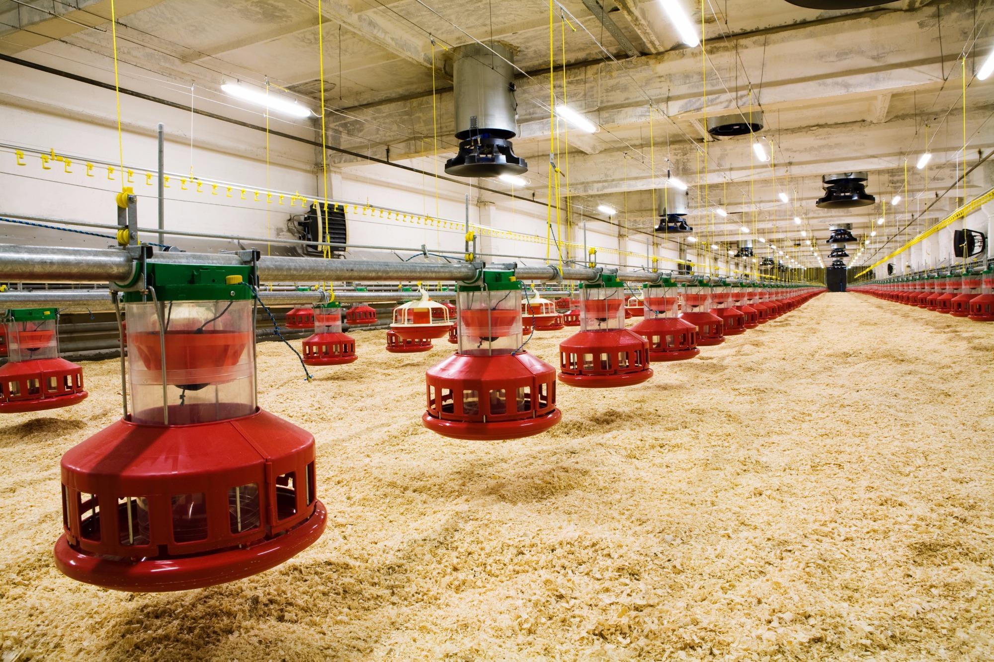 avicultura, fotos atualizadas , Divulgação