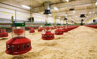 Tecnologia nos aviários será fundamental para se manter no mercado