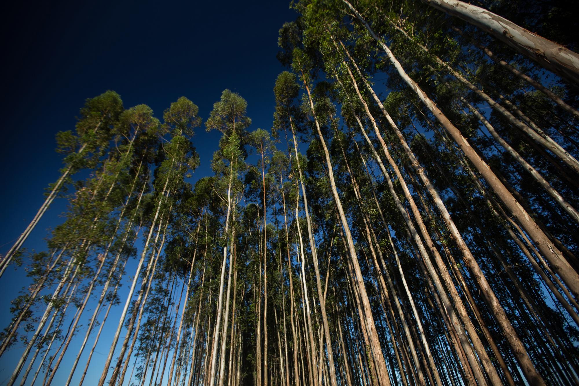 Região Oeste do Paraná debate biomassa florestal para produção de energia