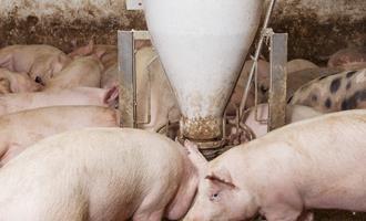 Estratégias de mitigação devem continuar a ser investigadas e adotadas para evitar a entrada de PSA nos EUA por meio da alimentação