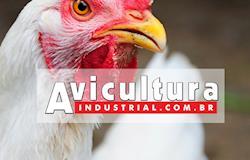 Portal Avicultura Industrial alcança mais de 1 milhão de acessos em 2017