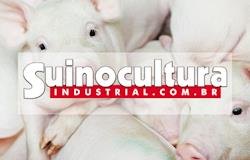 Portal Suinocultura Industrial alcança quase 900 mil de pageviews em 2017