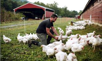 Marca de frangos orgânicos investe em negócio com foco na geração Millennials