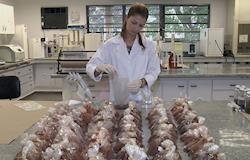 Dejetos de galinha viram biocarvão e ajudam a recuperar águas
