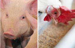 Agronegócio, agronegócio, fotos atualizadas