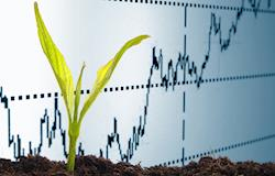 Agronegócio brasileiro deve crescer 3,17% neste ano, diz Cepea