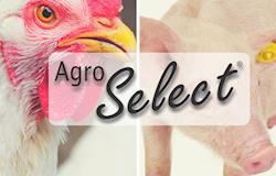 Com sistemas de bebedouros, Agro Select é presença na AveSui 2018