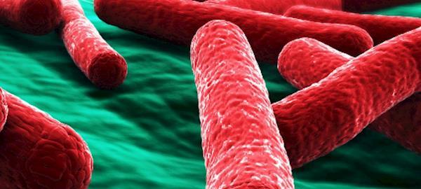 Soluções para o controle da Salmonella no Brasil