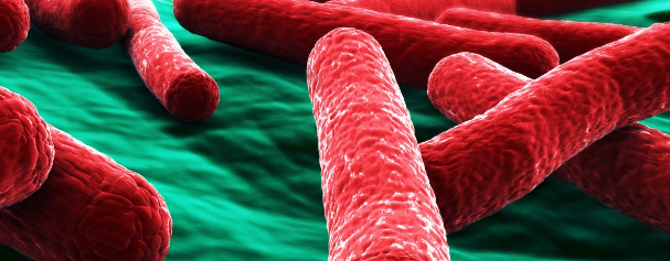 Estudo genético busca impedir infecção alimentar por salmonela