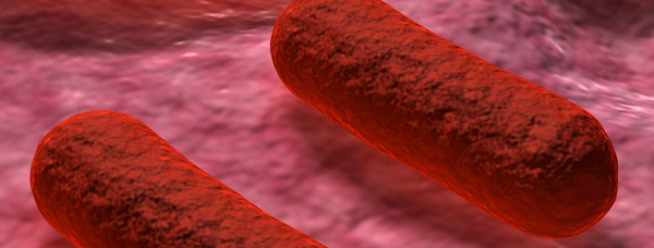Uso de antissalmonelas em matérias-primas e rações: uma visão prática e suas aplicações