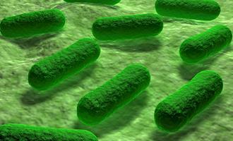USDA divulga plano para diminuir Salmonella em carnes, aves e ovos
