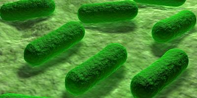 FSIS atualiza diretrizes sobre o controle de Salmonella e Campylobacter