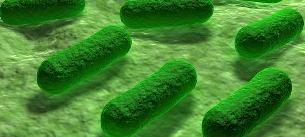 Cientistas identificam a mudança genética que torna Salmonela Africana perigosa