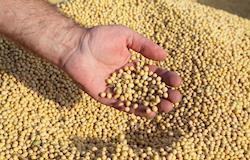 Com oferta retraída, cotação da soja se mantém elevada no mercado