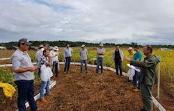 Cooperativa investe em pesquisas de perfil de solo em Tocantins