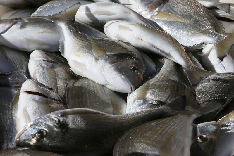 Convênio entre governo e Acrepeixes impulsiona piscicultura do Acre