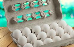 Com embalagem biodegradável, estojo para 18 ovos é lançado