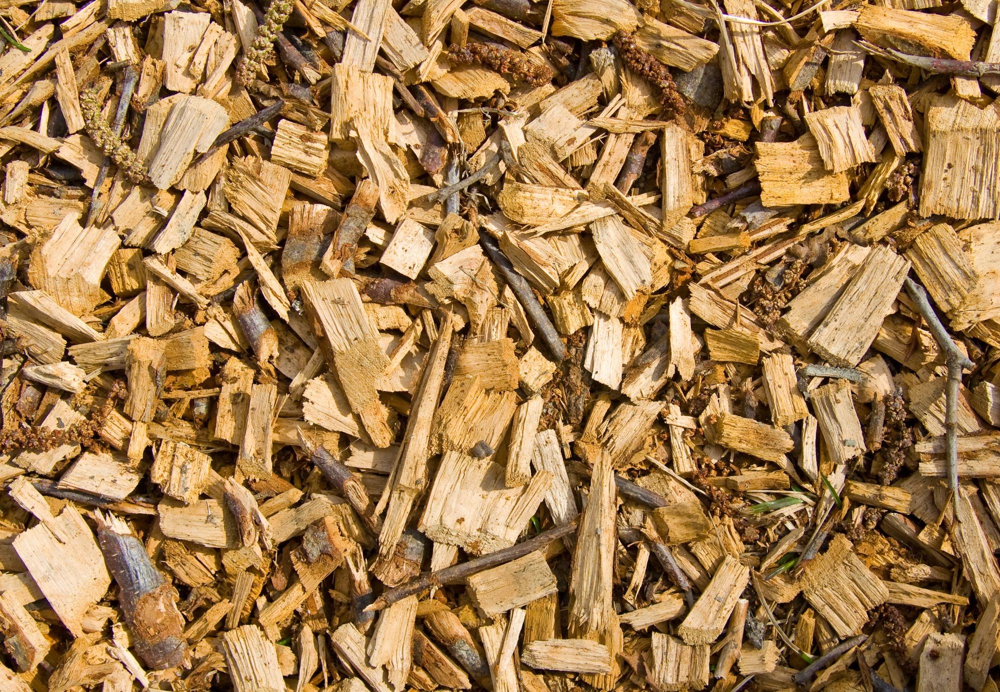 Paraná terá primeira cooperativa de geração distribuída a partir de biomassa lenhosa
