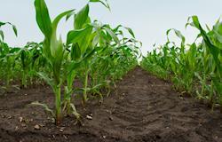 Preços de farelo e óleo de soja registram alta no mercado