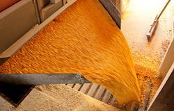 Novo leilão de milho da Conab vai atender Norte e Nordeste