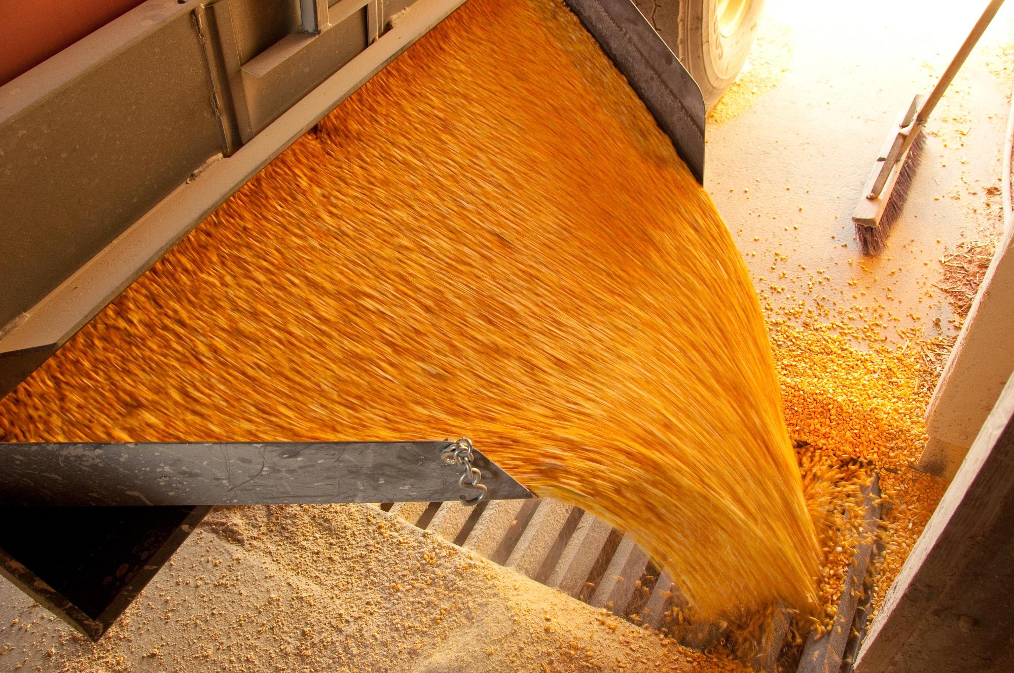 Embargo da UE afeta produção de ração e demanda por grãos