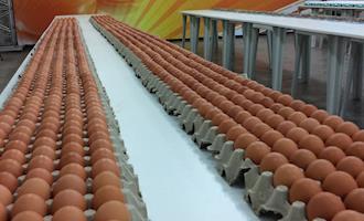 Comissão divulga o regulamento 2018 do Concurso de Qualidade de Ovos