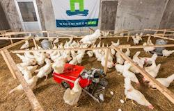 Era digital: o futuro da tecnologia avícola