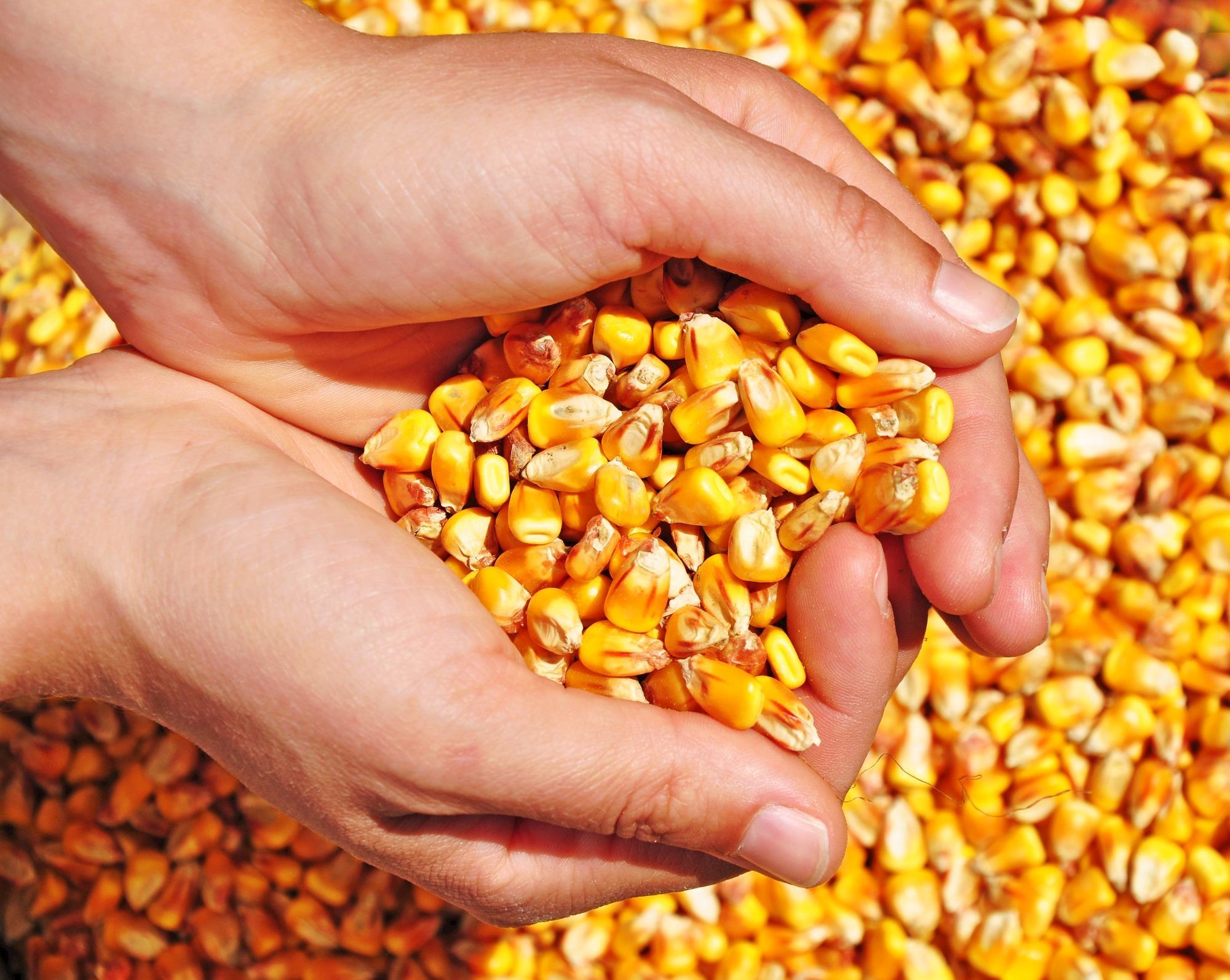 Contratos futuros de milho, precificação regional e gestão de riscos