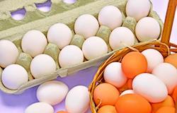 Embrapa e Esalq promovem II Egg Production Precision Day