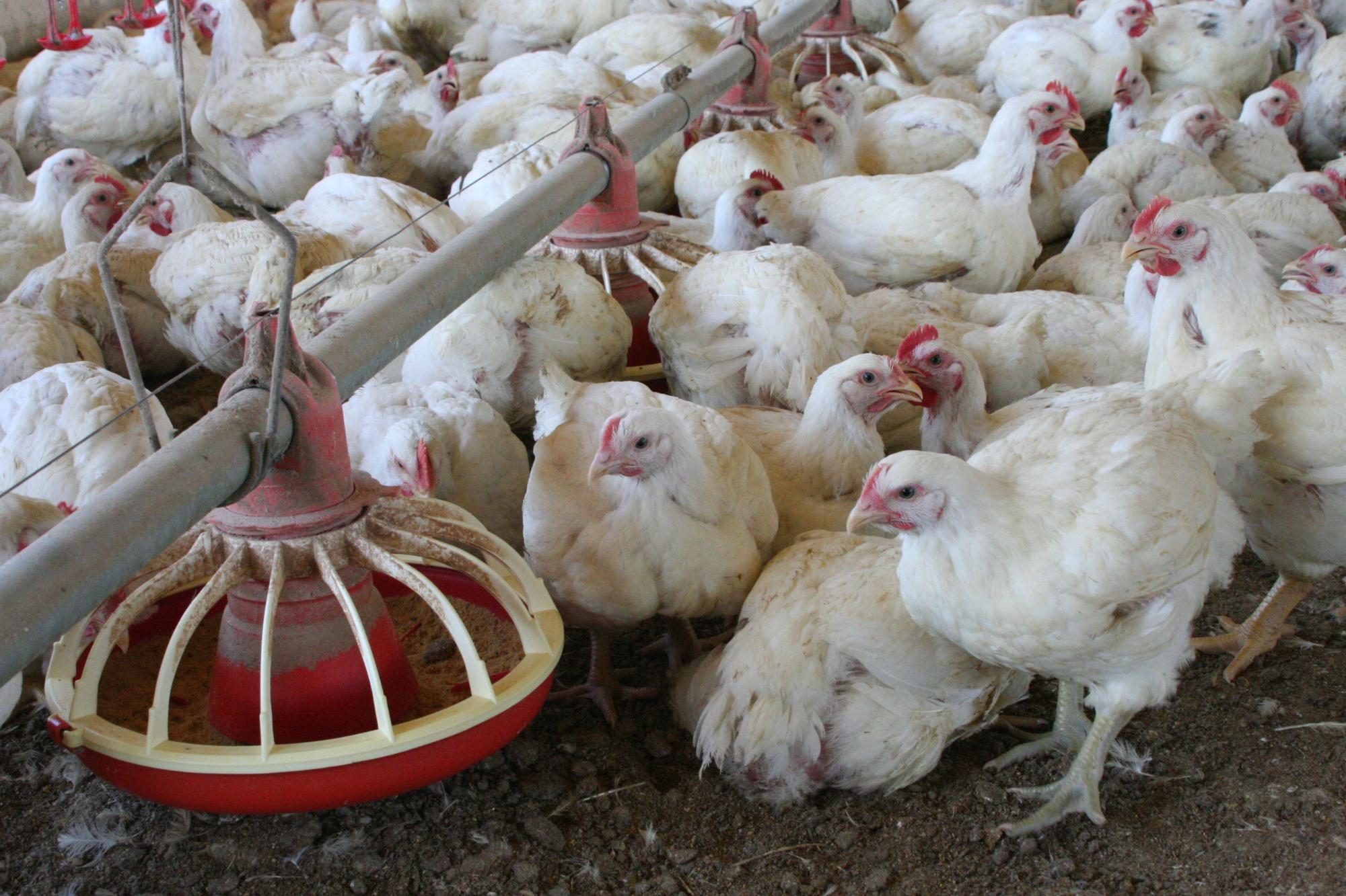 Comitê avícola se reúne e discute crescimento do setor