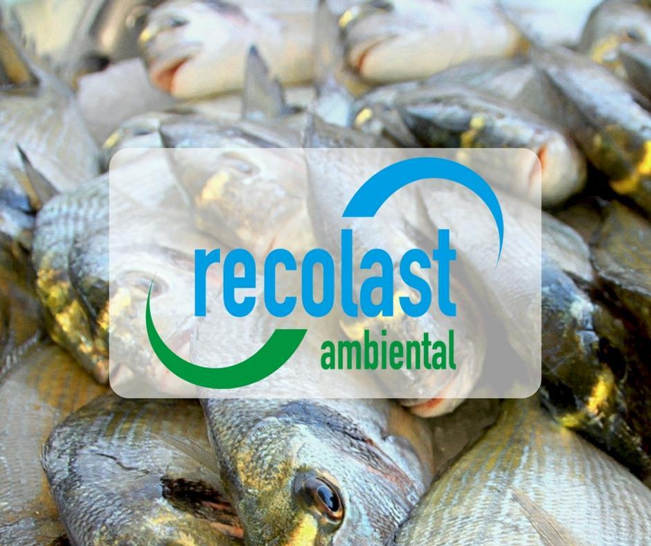 Fábrica de peixes e aquaponia tem baixo investimento e retorno rápido