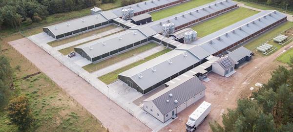 Aviagen investe estrategicamente em seu programa de melhoramento genético no Reino Unido