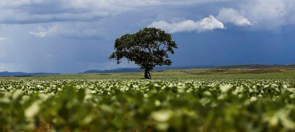 Soja responde por 16% das exportações do país no semestre