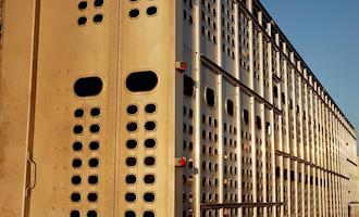 Espanha implanta plano de controle de temperatura no transporte de animais vivos
