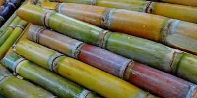 Biomassa, biomassa, fotos atualizadas